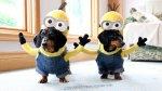 YouTube: perros Minions son un éxito en las redes sociales - Noticias de anita miller al fondo hay sitio