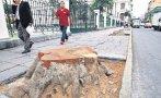 Municipio de Lima retira 7 árboles del Jr. Junín por deterioro