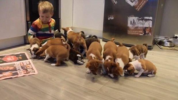 Así es la vida de una familia con 16 cachorros en casa [VIDEO]