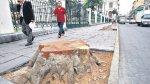Municipio de Lima retira 7 árboles del Jr. Junín por deterioro - Noticias de tala de árboles