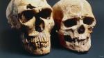¿Qué hace que los humanos seamos diferentes de los animales? - Noticias de museo de historia natural en nueva york