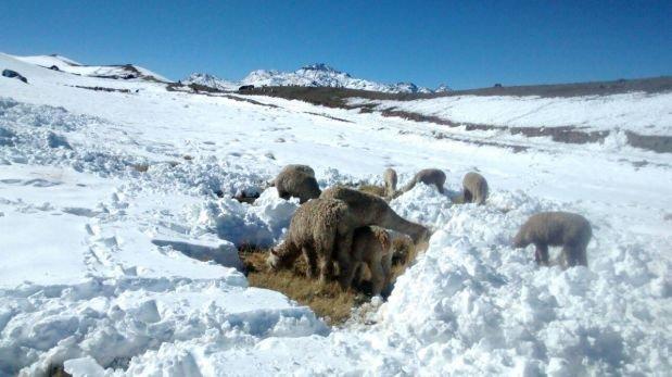Declaran en situación de emergencia a tres provincias de Puno
