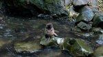 Descubre esta catarata donde tiernos lobos marinos se divierten - Noticias de lobos marinos