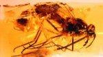 Hallan mosca de hace 105 millones de años en perfecto estado - Noticias de museo de historia natural en nueva york