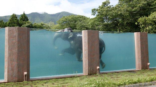 Al Agua Elefante Construyen Piscina Transparente En Jap N