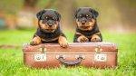 Colas a Bordo: conoce el proyecto para viajar con tu perro - Noticias de campaña de vacunación