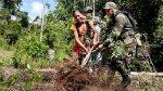 Perú redujo cultivo de hoja de coca por tercer año consecutivo - Noticias de flavio mirella