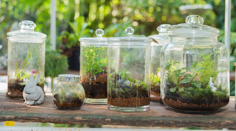 Bella decoraci n arma tus propios terrarios con plantas for Decoracion para terrarios