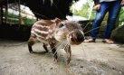 Tarapoto: animales silvestres y su duro camino de vuelta a casa
