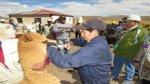 Agricultura entrega kits veterinarios para proteger camélidos - Noticias de la folie