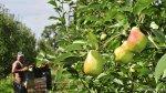¿Por qué se pudrieron 200 mlls. de kilos de fruta en Argentina? - Noticias de mundial brasil 2014