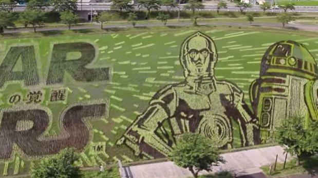 Mira estas geniales figuras de Star Wars en un campo de arroz