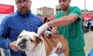 Puno: Amplían por 60 días emergencia sanitaria de rabia canina