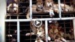 'Vuelve a casa, perrito', el video que remece a Vietnam - Noticias de campaña de salud