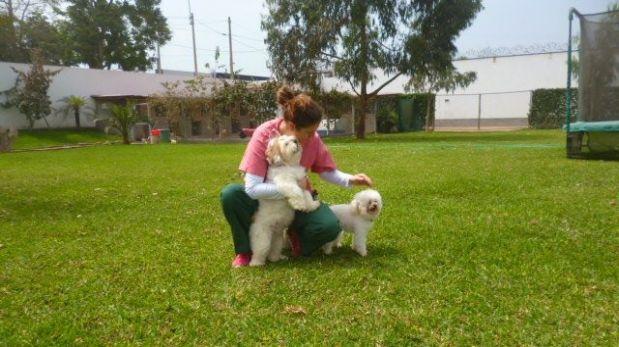 Hospedaje Pets Camp Perú (Foto:  web de Pets Camp Perú)