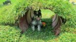 Conozca el rentable negocio de hospedaje para perros en Lima - Noticias de colitas