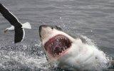 Los métodos más sofisticados para evitar los ataques de tiburón