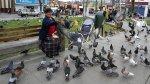 San Miguel: quienes alimenten palomas serán multados con S/.385 - Noticias de multa