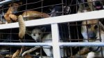 Corea del Norte celebró concurso gastronómico de carne de perro - Noticias de perros calientes