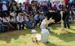 Cajamarca: Evalúan denominar Conga a queso hecho en la región