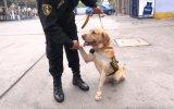 La Brigada Canina que desfiló en la Parada Militar [VIDEO]