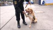 Conoce a la Brigada Canina que desfiló en la Parada Militar