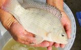 Produce capacitará en materia acuícola a más de 200 pescadores