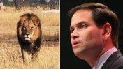 """""""Se indignan por un león muerto, pero no por bebés abortados"""""""