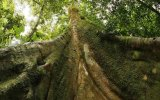 Árboles necesitan hasta cuatro años para recuperarse de sequías