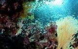 Por qué los corales son más peligrosos de lo que crees