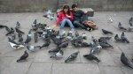 Alimentar palomas en La Punta te costará 385 soles - Noticias de multa