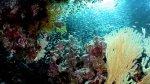 Por qué los corales son más peligrosos de lo que crees - Noticias de capitan cook