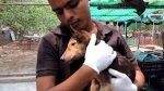 Salvan a perro moribundo que iba a morir de distemper [VIDEO] - Noticias de la arena