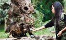Parque de las Leyendas investigará contratos irregulares