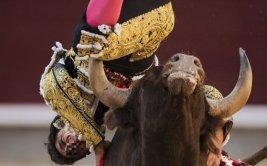 Joven torero sufrió brutal cornada en plaza de Madrid [VIDEO]
