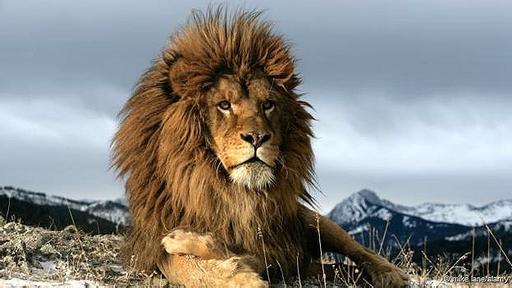¿Existe aún el imponente león del Atlas?