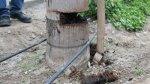 Av. Javier Prado: cinco palmeras han sido dañadas [FOTOS] - Noticias de accidente automovilístico
