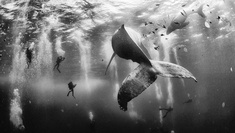 National Geographic: los ganadores de su concurso fotográfico