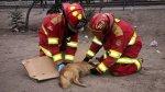 Bomberos logran rescatar y salvar un perro que ya creían muerto - Noticias de pancho