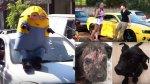 YouTube: estos son los 3 videos más vistos del día - Noticias de chevrolet