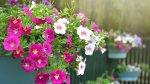 Cómo mantener tus plantas en invierno - Noticias de escasez de agua