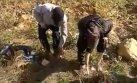Cajamarca: peculiar castigo con hormigas para ladrones [VIDEO]
