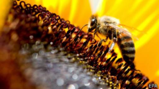 El botánico cree que se han exagerado los riesgos del declive de la población de abejas en el mundo.