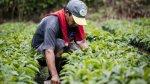 Chimbote: Plantan árboles en antiguo botadero cercano a colegio - Noticias de pueblos jovenes
