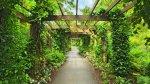 Cubre los muros de tu casa con plantas trepadoras - Noticias de maria isabel gonzalez