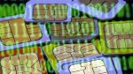 Los peruanos estamos comprando más celulares con doble chip - Noticias de fernando reina