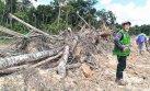 Defensoría pide suspender permisos para sembrar palma aceitera
