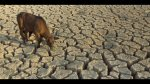 Sequía obliga a animales a buscar alimentos en zonas urbanas - Noticias de escasez de agua