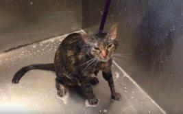 Gato 'implora' a su dueño para que no siga bañandolo [VIDEO]