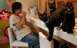 Los cafés con gatos conquistan el mundo [FOTOS]